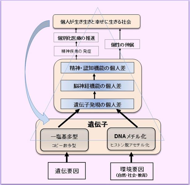 個人差(個性)を支えるゲノム・エピゲノム(遺伝-環境)基盤の解析