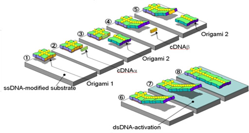 Nanosystem realized by DNA origami self assembly